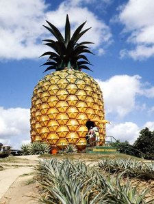 257564-big-pineapple