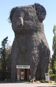 640px-Giant_Koala